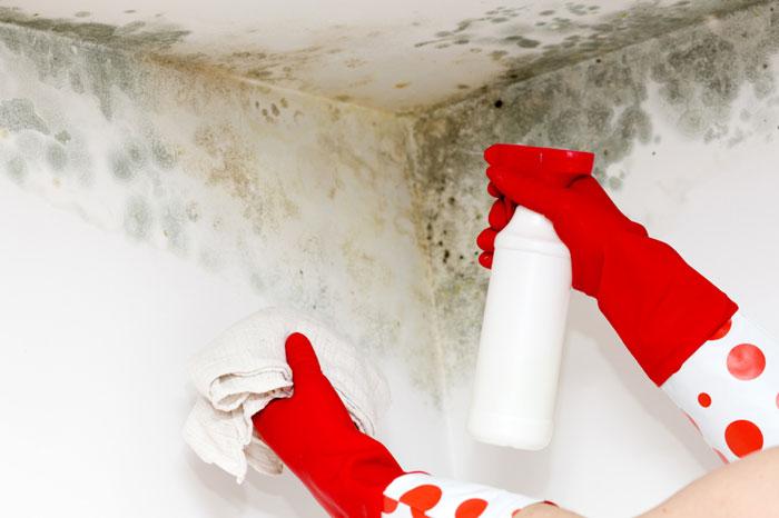 Как избавиться от плесени в квартире или загородном доме